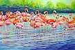 Flamingos_m.jpg