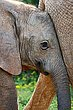 Baby ellie Addo National Park South Africa.jpg