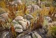 Antelope Island Color.jpg