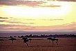 Kitchwa Tembo Sunrise.jpg
