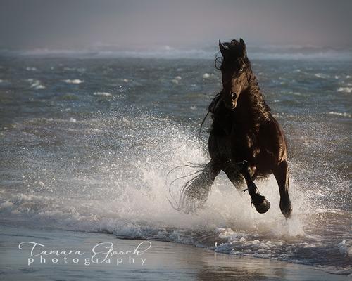 Sea Horse-ABS_7554.jpg