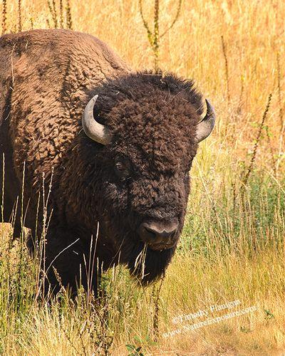 Approaching Buffalo - BUF-0036.jpg