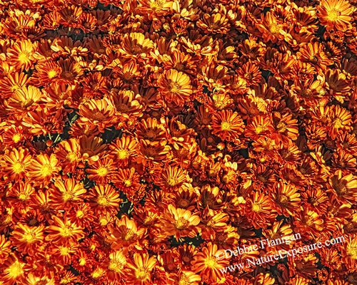 Autumn Collage - ABC-0019.jpg