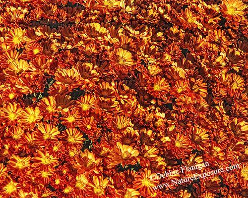 Autumn Collage - FLO-0029.jpg