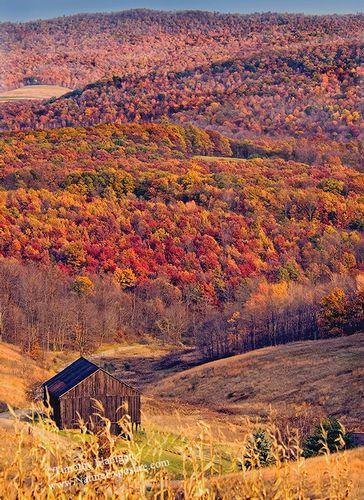 Bedford County Fall Foliage - LAN-0024 - Odd Size - Canvas Only - Contact for price.jpg