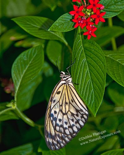 Butterfly - Looking Up Butterfly - INS-0018.jpg