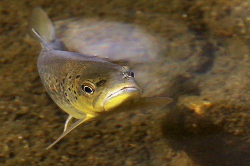 Fly Fishing -1.jpg