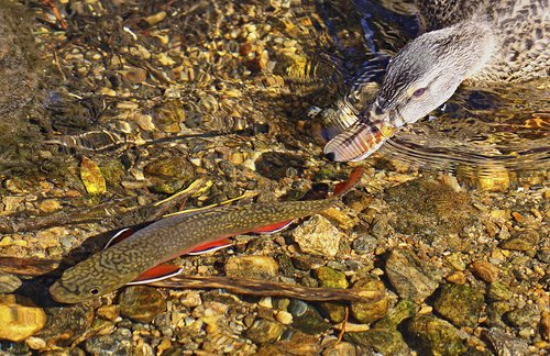 Fly Fishing -2.jpg