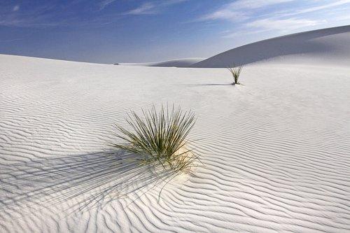 white sands C.jpg