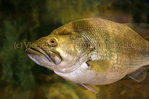 CO FISH -100.jpg