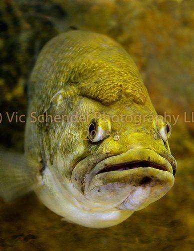 CO FISH -101.jpg