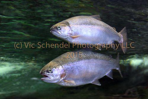 CO FISH -103.jpg