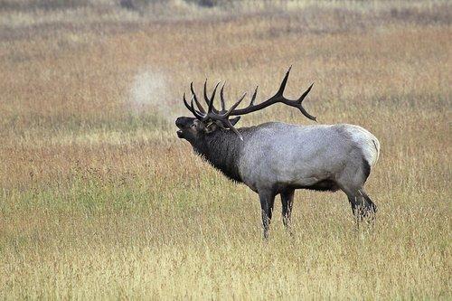 Elk 1001.jpg