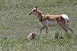Antelope 1002.jpg