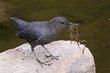 Birds 1000.jpg