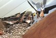 Birds 1001.jpg