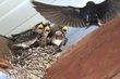 Birds 1002.jpg