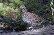 Birds 1003.jpg