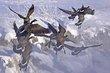 Ducks and Geese 1003.jpg