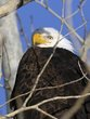 Eagles 1002.jpg