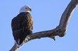 Eagles 1003.jpg