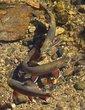 Fish_Fisherman 1003.jpg
