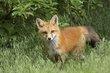 Fox 1000.jpg