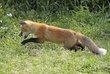 Fox 1004.jpg