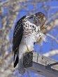 Hawk 1000.jpg
