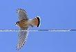 Hawk 1003.jpg