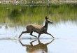 Mule Deer -1.jpg