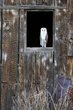 Owl -2.jpg