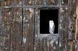 Owl -3.jpg