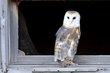 Owl -4.jpg