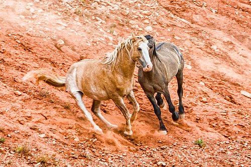 Wild Horse-1002.jpg