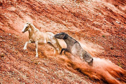 Wild Horse-1003.jpg