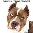 blue dog pet photography Mentor Ohio.jpg