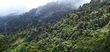 Cloud forest Boquete Panama.jpg