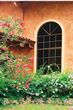 Flowers and Window.jpg