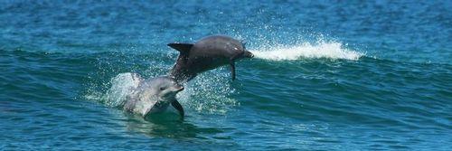 Image 7 Dolphin Fun.jpg