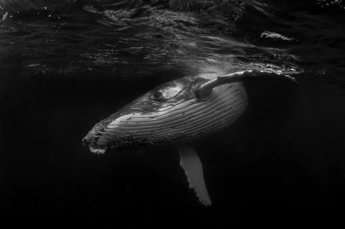 Image 9 - Whale Dance-73961.jpg