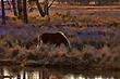 Chincoteague Ponies 1001.jpg