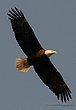 Guntersville Eagles  41.jpg