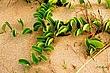 Beach Crawler.jpg