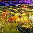 In the Flow 2.jpg
