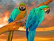 Parrots at Sunset.jpg