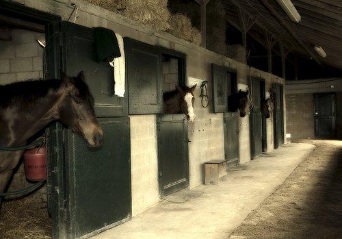 Horseracing-225 web.jpg