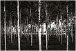 10It.Trees_4428g.jpg