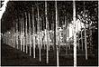 10It.Trees_4430g.jpg