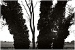10It.Trees_4431g.jpg
